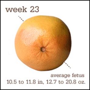 Week 23 1