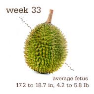 week 33 1