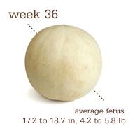 week 36 1