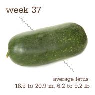 week 37 1