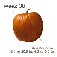 week 38 1