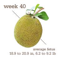 week 40 1
